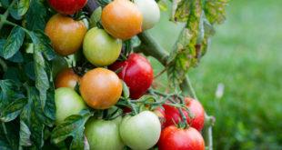 L'agricoltura deve attrarre giovani: necessario puntare sulla qualità