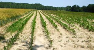 Emergenza siccità, piano a tutela degli agricoltori