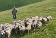 Abruzzo: bando Psr riservato ai giovani