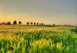 G7: presentata la Carta del biologico di Bergamo