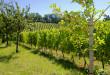 Molise, contributi settore vinicolo, aperti i termini per le domande