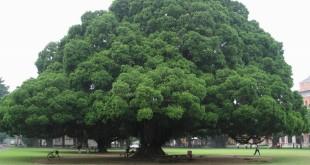 Creato il primo elenco degli alberi monumentali d'Italia