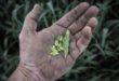 Molise, bando agricoltura: chiarimenti dal Cesca Unsic