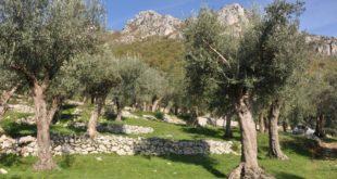 Sei nuove aree iscritte nel Registro nazionale dei paesaggi rurali storici