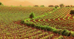 Psr Calabria: sostegno ad associazioni di agricoltori per regimi di qualità