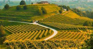 "Treviso, al via ""Vite in campo"""