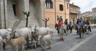 Si rinnova la transumanza a piedi, dalla Puglia al Molise
