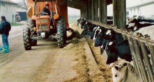 Zootecnia: raggiunta intesa sul programma dei controlli funzionali