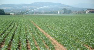 Emilia-Romagna per i danni da siccità e gelate in arrivo 1,8 milioni