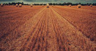 Cassa integrazione lavoratori agricoli